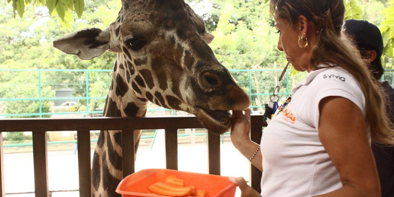 Nuevos métodos para cuidado de animales en Centenario y Animaya