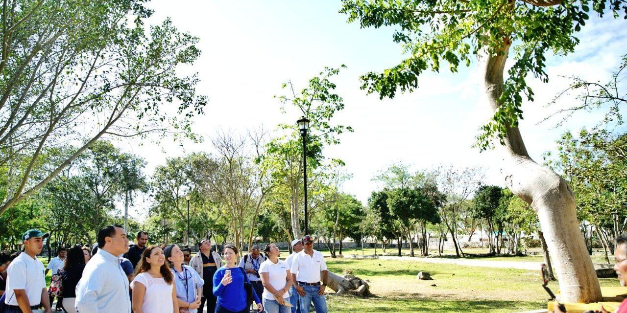 Renán Barrera recorre Anicabil y verifica acciones de arborización