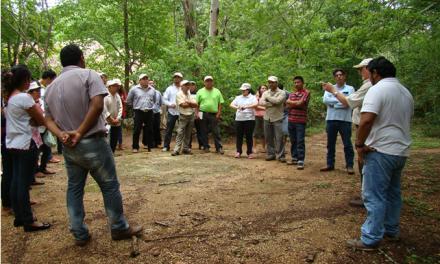 Escaso activismo sobre temas ambientales en Yucatán