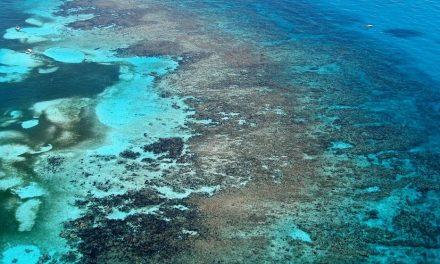 Los océanos se están volviendo más azules, pero no es una buena noticia