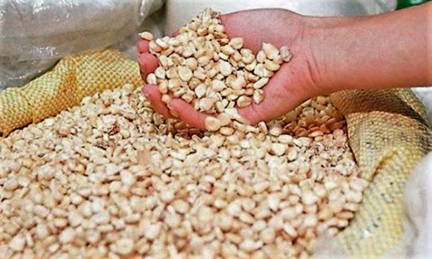 Facetas de México: Precios de garantía de granos empobrecieron a millones de productores del campo