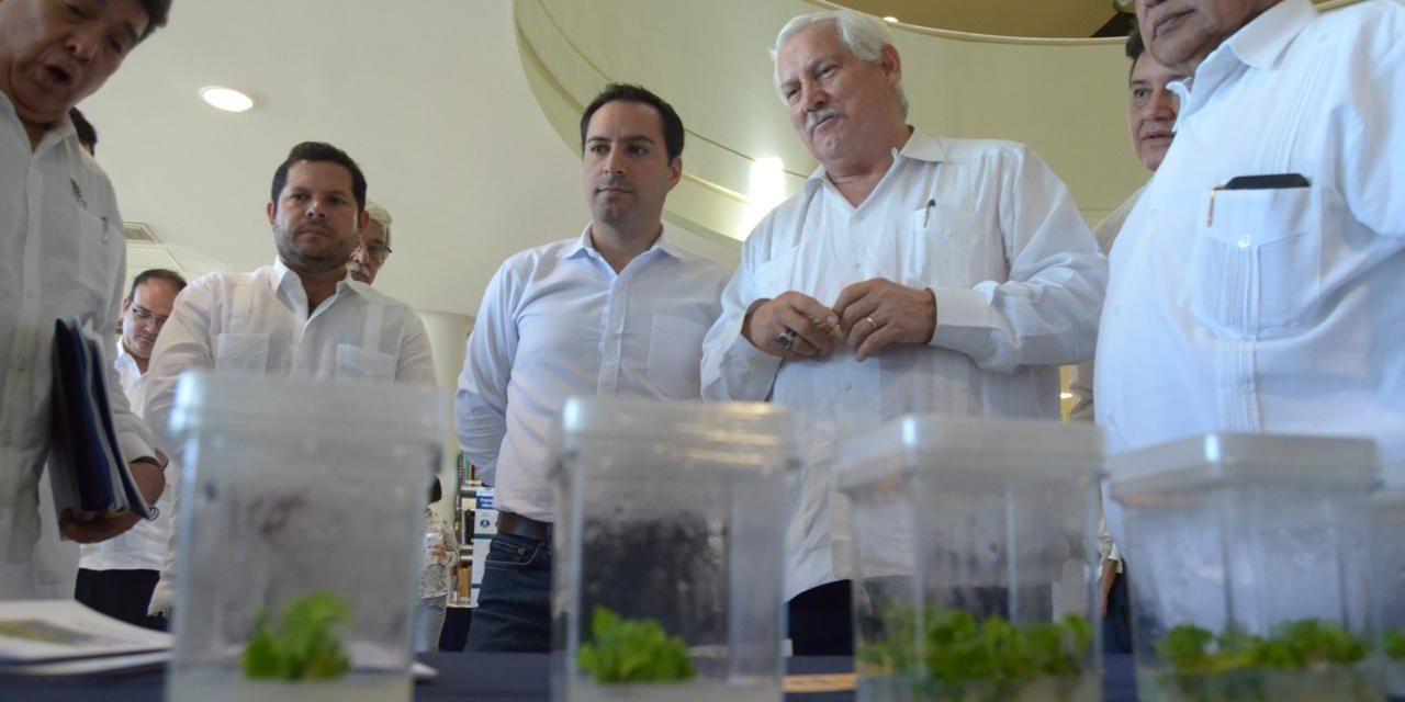 Alinean Yucatán y SADER proyectos agropecuarios y pesqueros