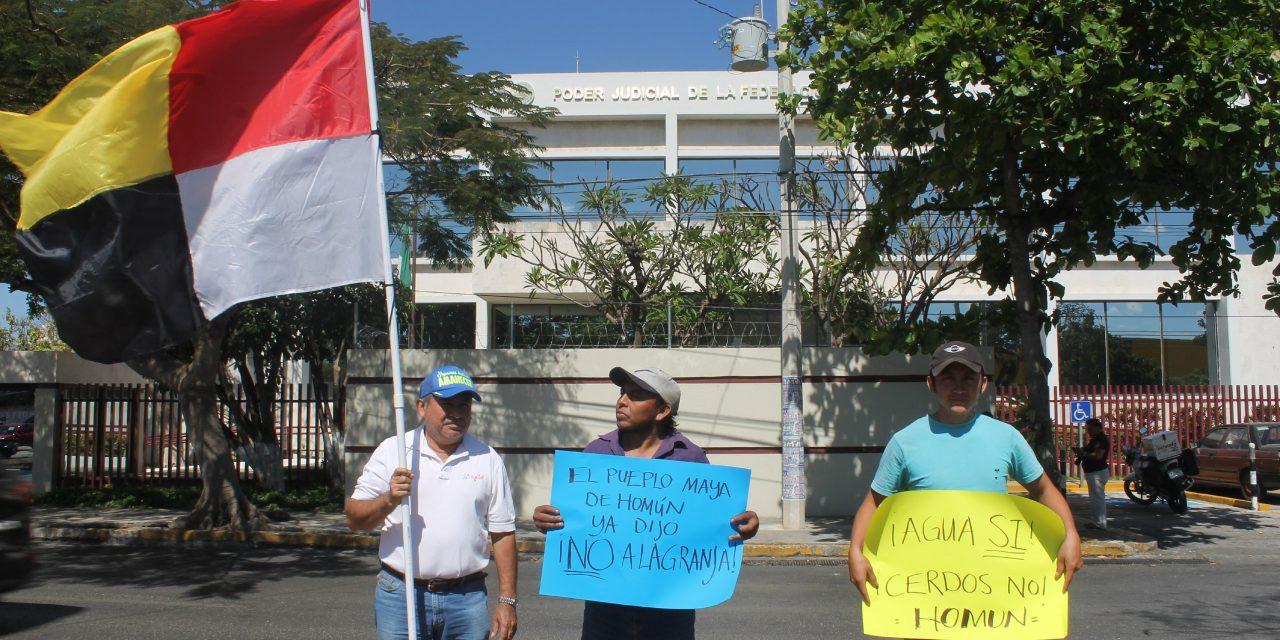 Pospuesta votación en proyecto de sentencia sobre MIA de megagranja en Homún