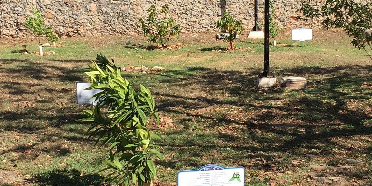 'Germina semilla' medioambiental en comisaría de Cholul