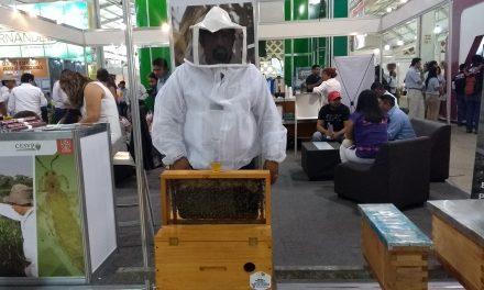 'El sabor amargo' de la apicultura: precios por los suelos