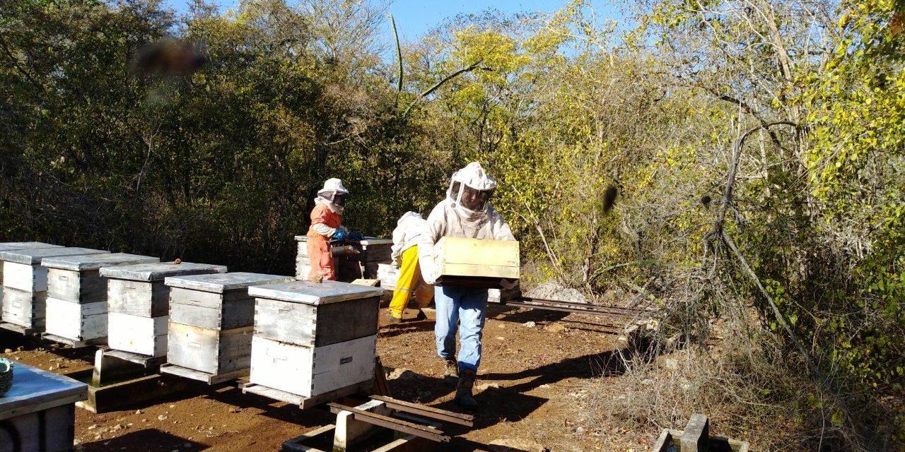 Herbicidas, clima y bajos precios, trinomio negativo para apicultores (video)