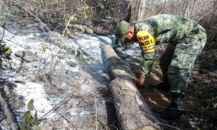 """Incendio activo en reserva federal """"Balam Kaax"""", al sur de Yucatán"""