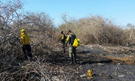 Área Natural Protegida Balam Kaax, asediada por incendios
