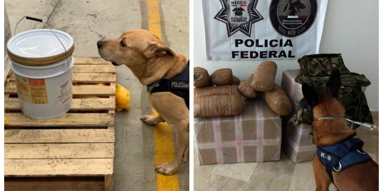 ¡Qué perros! Caninos de la PF hallan droga en Mérida y Cancún