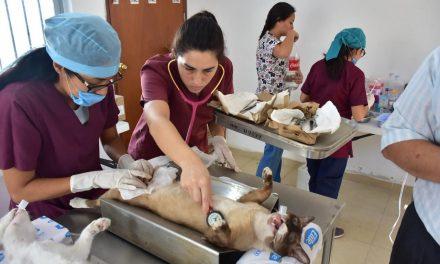 Disponibles en Mérida vacuna antirrábica gratuita para perros y gatos