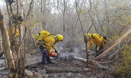 Arrasadas 305 hectáreas por dos incendios en Tetiz