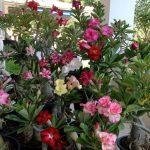 Tráfico de orquídeas en Yucatán, exótico comercio ilegal