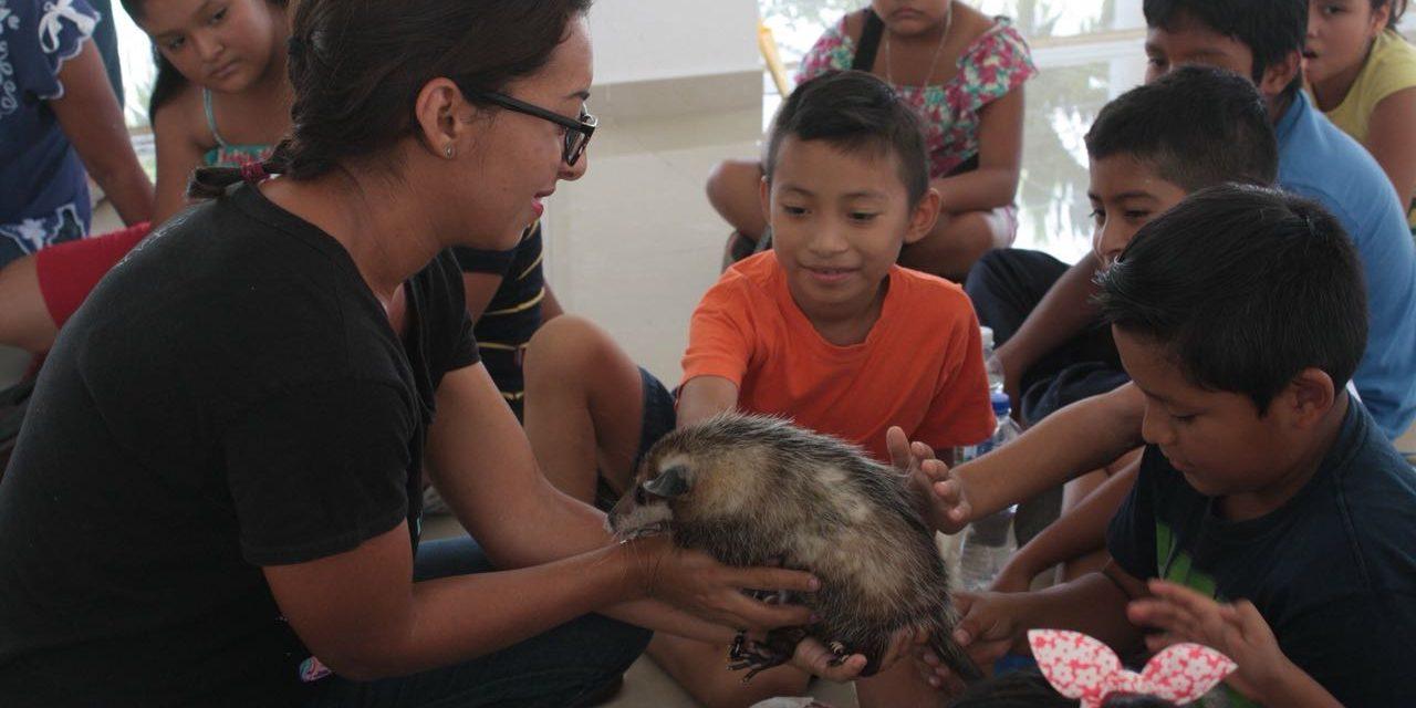 Notable labor de protección a zarigüeyas en Mérida requiere ayuda
