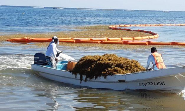 Limitado inicio de Protocolo de Atención a Sargazo en Quintana Roo