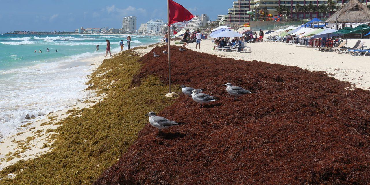 Crisis del sargazo activa frente común en Quintana Roo