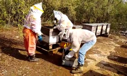 Agricultura intensiva, plaguicidas y cambio climático, amenazan a las abejas