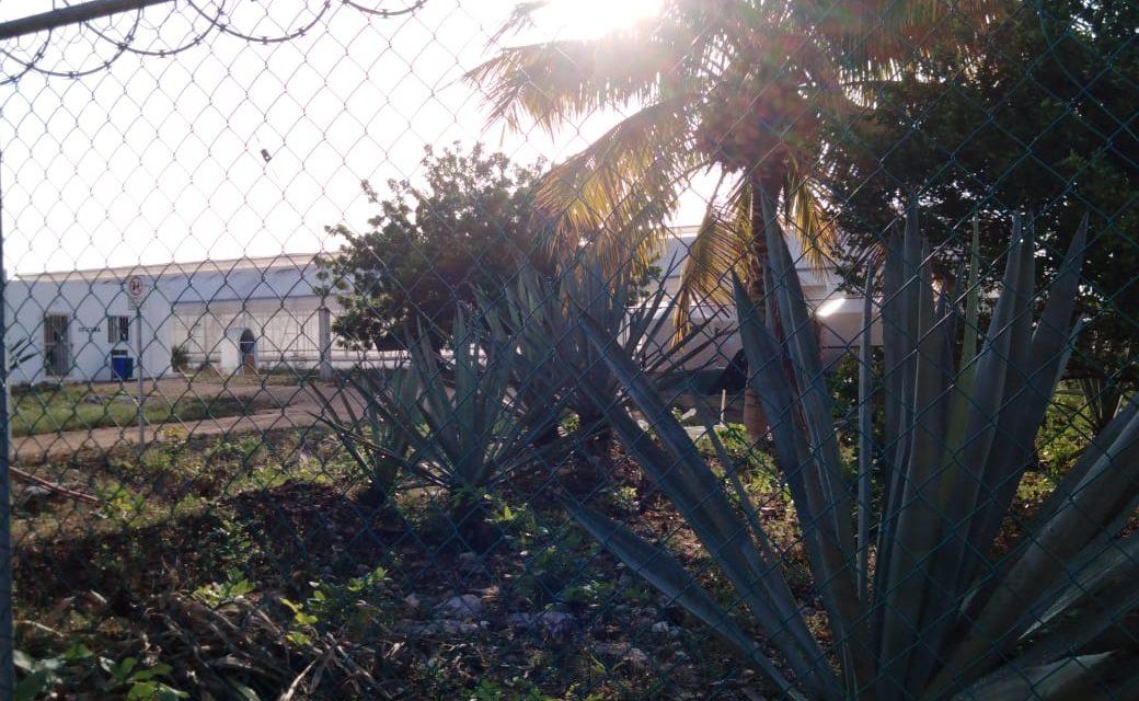 Rastrean cultivos de estupefacientes en Baca