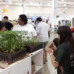 Cruzada Forestal 2019 del Ayuntamiento despierta interés y activa participación ciudadana