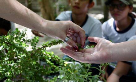 Reciben educación ambiental y se divierten en Ak k'aax