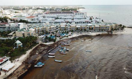 Sargazo en Riviera Maya ¿Problema grave?