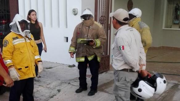 Atacan abejas a jóvenes en parque arqueológico de Xoclán