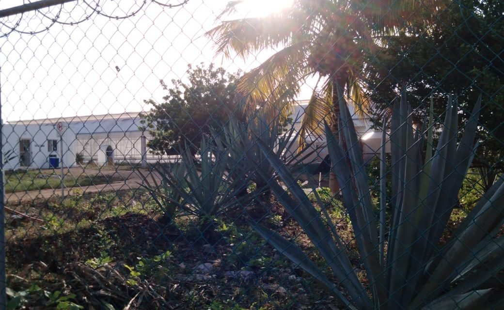 Un misterio: casi cuatro mil 900 plantas de marihuana halladas en Baca