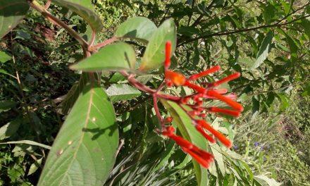 Herbolaria maya, práctica y conocimientos en riesgo de extinción