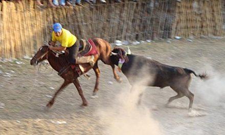 Prohíbe Quintana Roo corridas de toros, peleas de gallos y maltrato animal