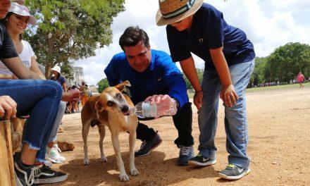 Inicia rescate de más de 20 perros en zona arqueológica de Chichén Itzá