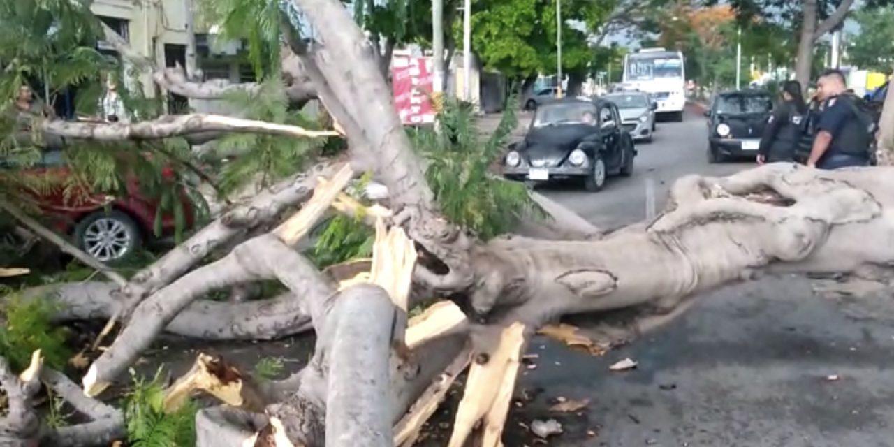 Tiran vientos y lluvias árboles y semáforo (Video)