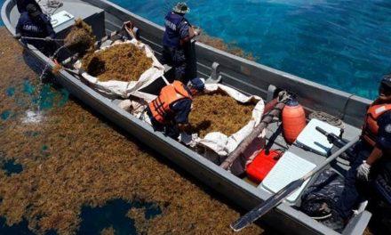 Casi 39 mil toneladas de sargazo recolectadas en Caribe Mexicano, de mayo a julio