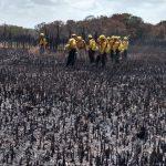 Dañadas 2,500 hectáreas en Reserva de la Biosfera Sian Ka'an (Video)