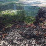 Cumple dos semanas incendio en Sian Ka'an, Quintana Roo