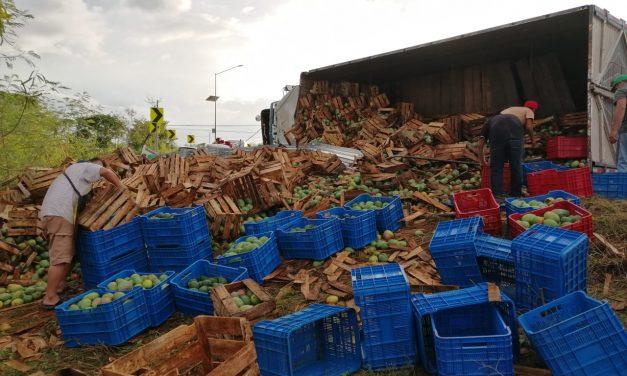 Regadero de 18 toneladas de mango en salida a la Mérida-Campeche; no hubo rapiña