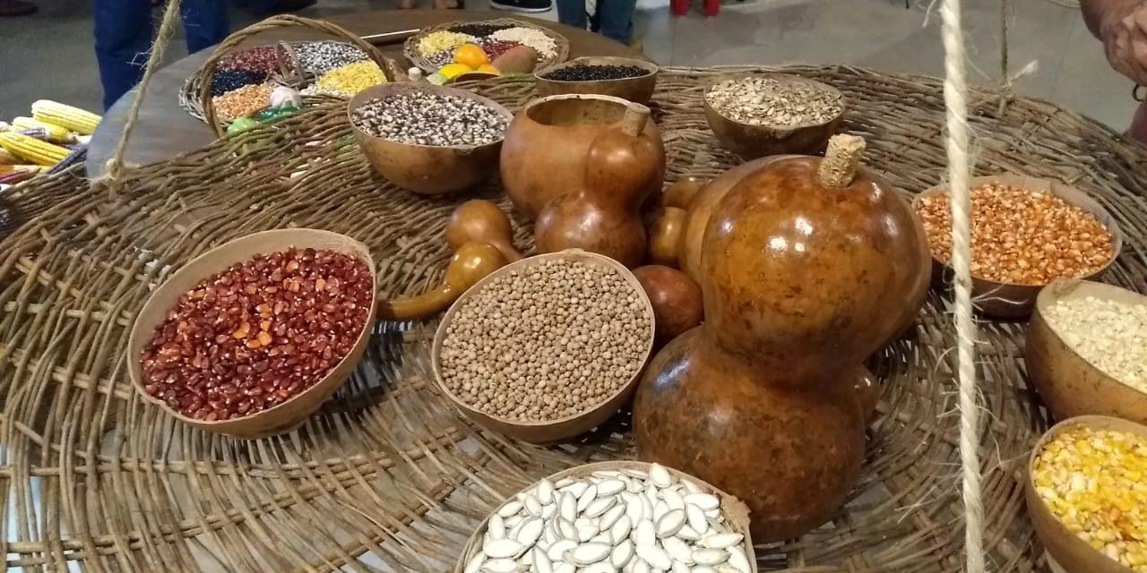 Muestra y preservación de conocimiento ancestral en cultivos mayas