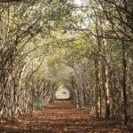 Camino del Mayab, proyecto creativo de turismo ecológico alternativo