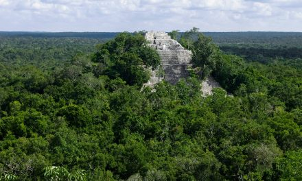 Pronatura vigila que Tren Maya no altere ecosistemas