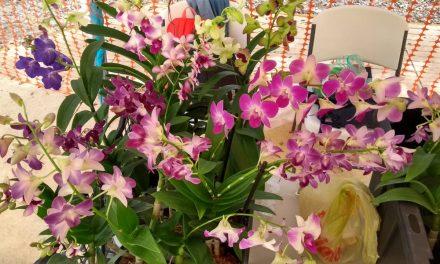 Orquídeas, claves en salud de ecosistemas naturales