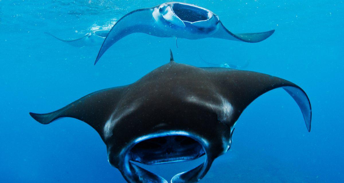 Greenpeace: respuesta urgente para impacto climático en océanos