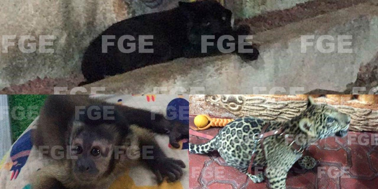 'Rescatados' animales exóticos en Playa del Carmen (Video)