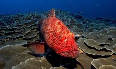 Fauna marina en riesgo por factor humano