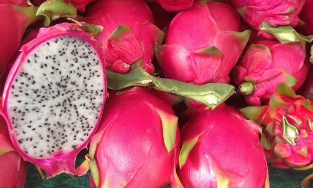 Pitaya, alternativa de colorantes naturales para industria farmacéutica