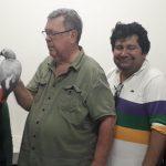 Loro gris, sustraído en asalto a hotel en Mérida, recuperado en Chetumal