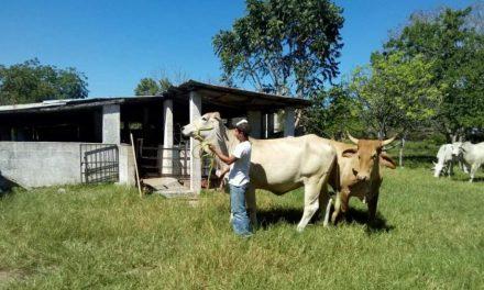 Se preparan en el campo yucateco para enfrentar severa sequía