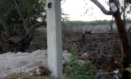 Amparo contra destrucción de mangle y humedal en municipio de San Felipe