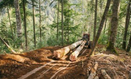 Pérdida de bosques y deterioro ambiental, mayor riesgo de enfermedades