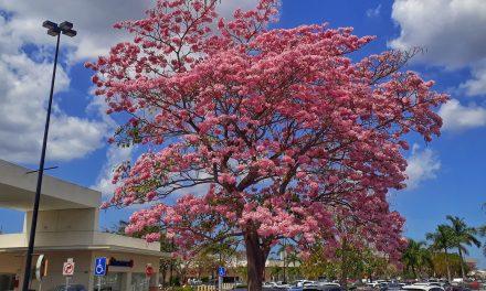 Vives en el error: hace medio siglo que la primavera no inicia el 21 de marzo