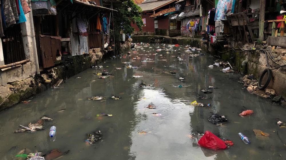 Alerta por riesgo de pandemias a causa de destrucción de naturaleza