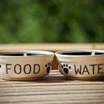 Animales contagiados por el COVID-19: dos perros, un gato y una tigresa