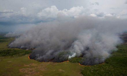 Incendios forestales, otra calamidad en la Península de Yucatán
